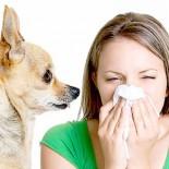 Гипоаллергенные породы собак: выбор собачников-аллергиков