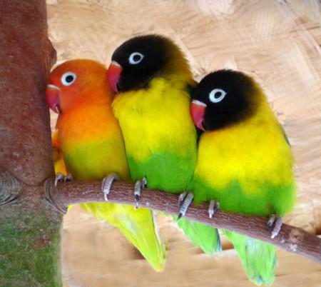 Самые способные попугаи из всех существующих пород