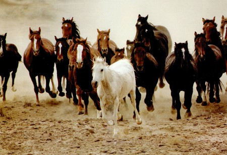 Лошади бежат