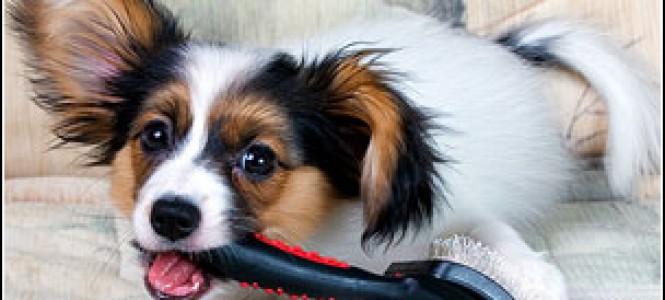 Выпадает собачья шерсть: причины, лечение, профилактика