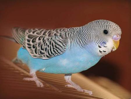 parrot disease diarrhea