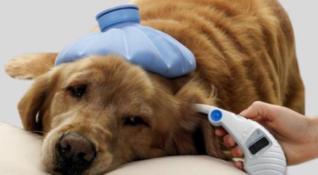 Болезнь у собаки