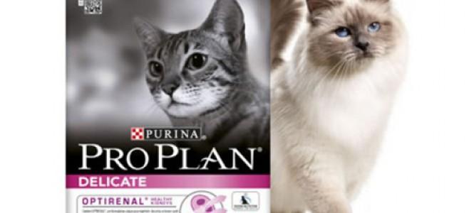 Преимущества и разновидности корма Пурина для кошек