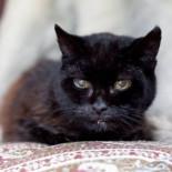 Как посчитать кошачий возраст по человеческим меркам