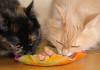 шеба корм для кошек качество сбалансированное питание натуральные компоненты