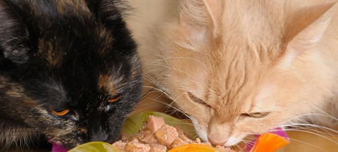 Особенности, преимущества и недостатки корма Шеба для кошек