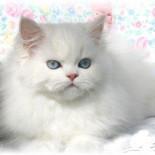 Стрижка кошек: причины, особенности и разновидности