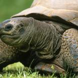 Сухопутные черепахи: содержание в домашних условиях, болезни