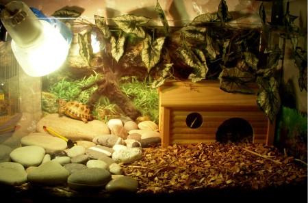 сухопутные черепахи особенности содержания в домашних условиях