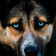 чумка у собаки симптомы признаки лечение