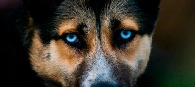 Симптомы, лечение и профилактика чумки у собак