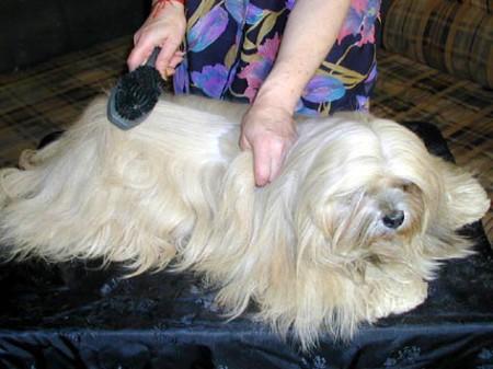 Негормональные причины выпадения шерсти у собак