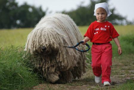 повадки венгерской овчарки характер