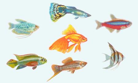 О группах рыб