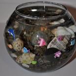 Рыбки для маленького аквариума: правильный выбор, создание среды обитания