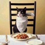 Корма премиум класса для кошек: преимущества, виды