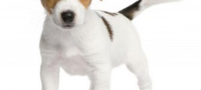 Симптомы, лечение и профилактика глистов у собак