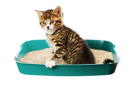 Способы лечения запора у кошек