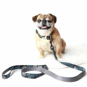 Personalized-Dog-Collar-2