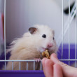 Pocket-Pets
