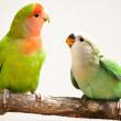 birds-home