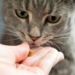 cat-treat-getty-674740907_sq
