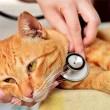 cat-veterinary-exam