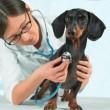 depositphotos_46518509-stock-photo-doctor-veterinarian-listens-a-dog