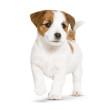 dog-puppy-landing-hero