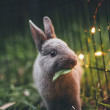 pets-and-friends-rabbit-2
