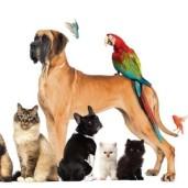 pets1-kYdB--621x414@LiveMint