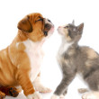 truth_about_cats_and_dogs_i