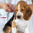 veterinar-vaccinare-caini